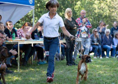 SwissBoxer-DogShow-2019-©BoxerClubGVA-(508)