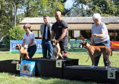 SwissBoxer-DogShow-2019-©BoxerClubGVA-(509)