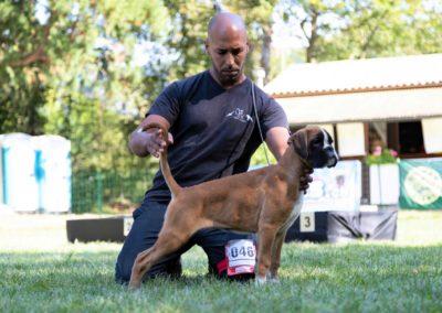 SwissBoxer-DogShow-2019-©BoxerClubGVA-(513)