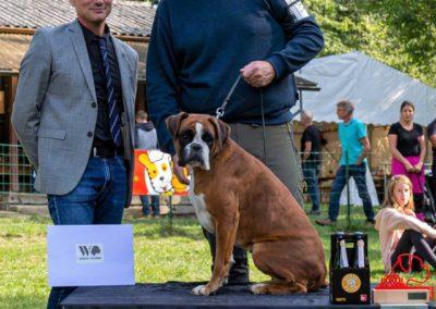 SwissBoxer-DogShow-2019-©BoxerClubGVA-(514)