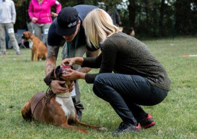 SwissBoxer-DogShow-2019-©BoxerClubGVA-(52)