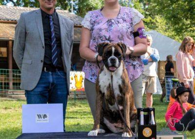 SwissBoxer-DogShow-2019-©BoxerClubGVA-(526)