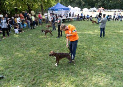 SwissBoxer-DogShow-2019-©BoxerClubGVA-(534)