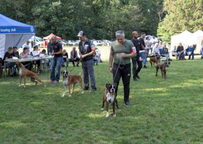 SwissBoxer-DogShow-2019-©BoxerClubGVA-(535)