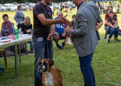 SwissBoxer-DogShow-2019-©BoxerClubGVA-(537)