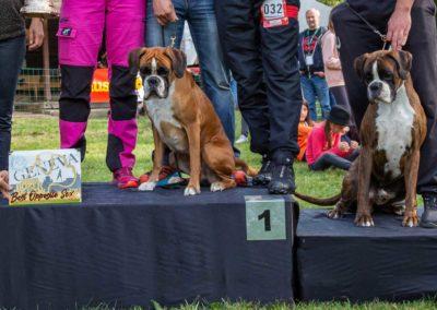 SwissBoxer-DogShow-2019-©BoxerClubGVA-(546)