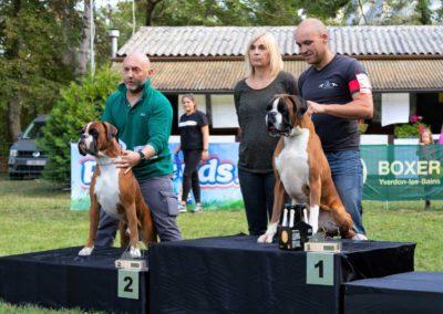 SwissBoxer-DogShow-2019-©BoxerClubGVA-(554)