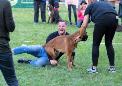 SwissBoxer-DogShow-2019-©BoxerClubGVA-(557)