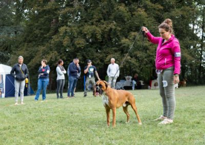 SwissBoxer-DogShow-2019-©BoxerClubGVA-(56)