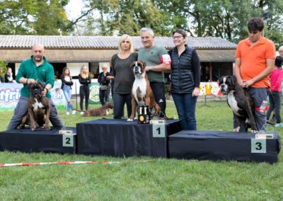 SwissBoxer-DogShow-2019-©BoxerClubGVA-(560)