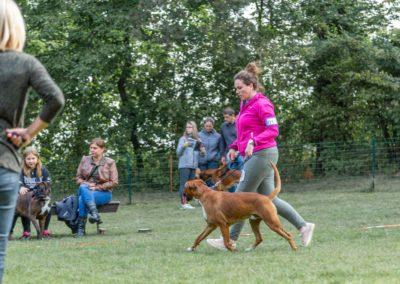 SwissBoxer-DogShow-2019-©BoxerClubGVA-(57)