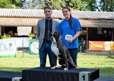 SwissBoxer-DogShow-2019-©BoxerClubGVA-(571)