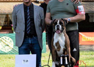 SwissBoxer-DogShow-2019-©BoxerClubGVA-(575)