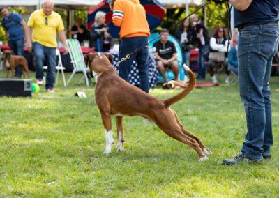 SwissBoxer-DogShow-2019-©BoxerClubGVA-(577)
