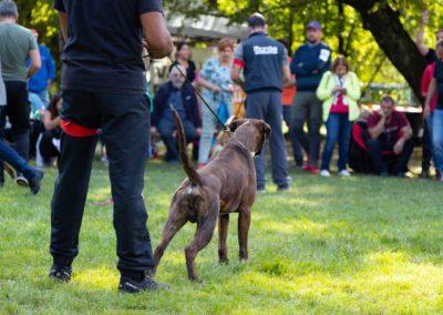 SwissBoxer-DogShow-2019-©BoxerClubGVA-(578)