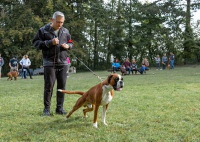 SwissBoxer-DogShow-2019-©BoxerClubGVA-(58)