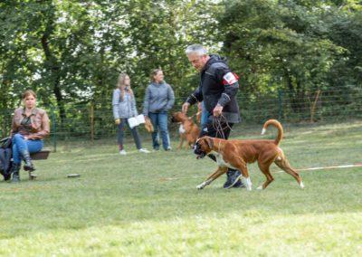 SwissBoxer-DogShow-2019-©BoxerClubGVA-(61)