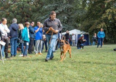SwissBoxer-DogShow-2019-©BoxerClubGVA-(63)