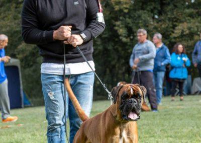 SwissBoxer-DogShow-2019-©BoxerClubGVA-(66)