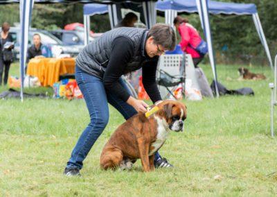 SwissBoxer-DogShow-2019-©BoxerClubGVA-(7)