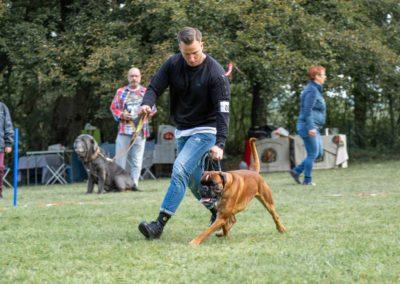 SwissBoxer-DogShow-2019-©BoxerClubGVA-(72)