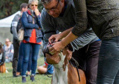 SwissBoxer-DogShow-2019-©BoxerClubGVA-(76)