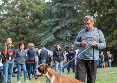 SwissBoxer-DogShow-2019-©BoxerClubGVA-(79)