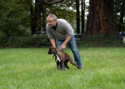 SwissBoxer-DogShow-2019-©BoxerClubGVA-(83)