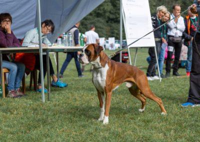 SwissBoxer-DogShow-2019-©BoxerClubGVA-(84)