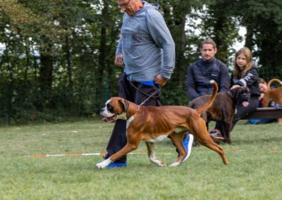 SwissBoxer-DogShow-2019-©BoxerClubGVA-(86)