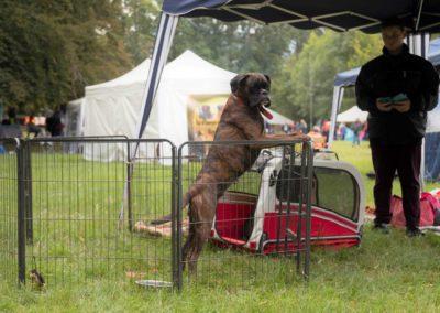 SwissBoxer-DogShow-2019-©BoxerClubGVA-(87)