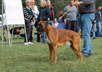 SwissBoxer-DogShow-2019-©BoxerClubGVA-(88)