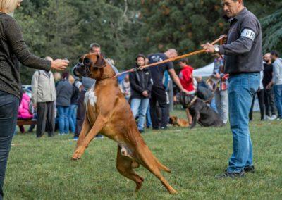 SwissBoxer-DogShow-2019-©BoxerClubGVA-(92)