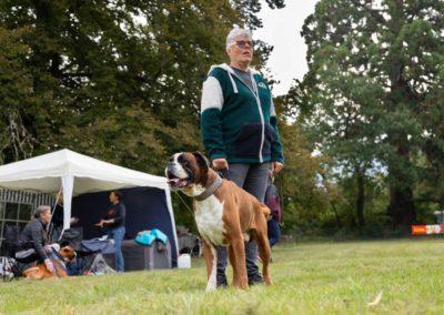 SwissBoxer-DogShow-2019-©BoxerClubGVA-(93)