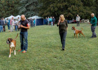 SwissBoxer-DogShow-2019-©BoxerClubGVA-(94)