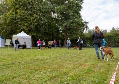 SwissBoxer-DogShow-2019-©BoxerClubGVA-(95)
