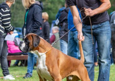 SwissBoxer-DogShow-2019-©BoxerClubGVA-(97)