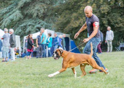 SwissBoxer-DogShow-2019-©BoxerClubGVA-(98)